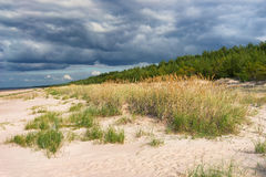 The green strip of wood on the sandy beach of the Baltic Sea Royalty Free Stock Photography