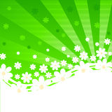 Green striped background with daisies Stock Photos