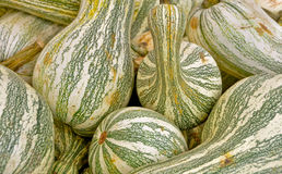 Green striped cushaw squash Royalty Free Stock Photos