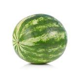 Green striped watermelon. Stock Photos