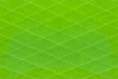 Green stripes pattern background. An abstract green background with a stripes pattern Royalty Free Stock Image