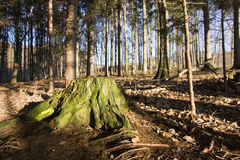 Green stump Royalty Free Stock Image