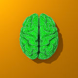 Green stylized low poly brain illustration Stock Photography