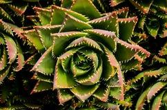 Green Succulent Flower Stock Photo