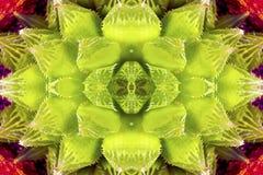 Green succulent. Closeup background image stock photos