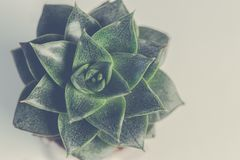Green Succulent Plant Stock Image