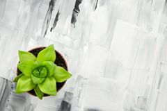 Green succulent plant on abstract painted background. Green succulent plant on abstract black and white painted background royalty free stock photography