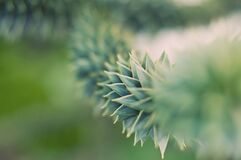 Green Succulent Plant in Close Up Photography Royalty Free Stock Image