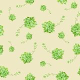 Green Succulent Plant Pattern Background royalty free stock images