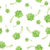 Green Succulent Plant Pattern White Background royalty free illustration