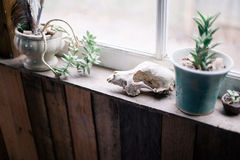 Green Succulent Plant on White Ceramic Plant Pot on Brown Wooden Table Beside White Wooden Glass Window Stock Photography