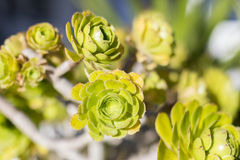 Green Succulent sunny plants Royalty Free Stock Photo