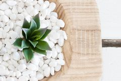 Green succulent in white pebbles with vintage wood background Stock Photography