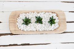 Green succulent in white pebbles with vintage wood background Stock Image