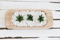 Green succulent in white pebbles with vintage wood background Stock Images