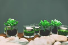 Green succulents and candels in decorative glasses royalty free stock photos