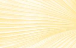 Green sugar palm leaf background in orange tone Stock Photography