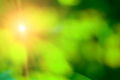 Green summer. Blurred green summer or spring abstract background Stock Photo