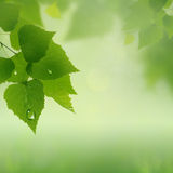 Green summer Stock Images