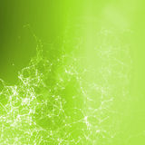 Green summer abstract background. Connecting dots, lens f Stock Image