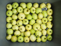 Green summer apples in sink. A pile of green summer apples floating in water in a gray kitchen sink stock photo