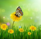 Green summer background with dandelions and a Royalty Free Stock Photos