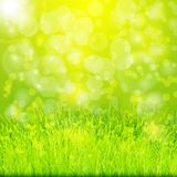 Green summer background with grass Royalty Free Stock Image