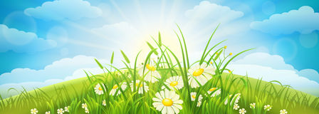 Green summer background Stock Photography