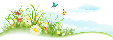 Green summer banner. Green spring summer banner with grass, flowers, butterfly and clouds Stock Image