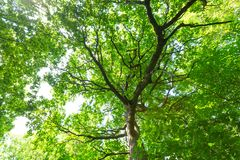 Green summer european forest Royalty Free Stock Image