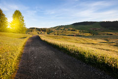 Green summer farmland Stock Photography