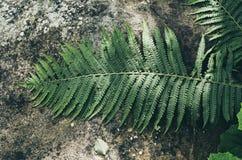 Fern leaf on the stone Stock Photos