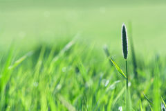 Green summer field background Stock Images