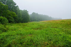 Green Summer Field Stock Photo