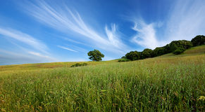 Green summer field and lone tree. Panorama of beautiful sky, lone tree, and green field in central California in summer Royalty Free Stock Images