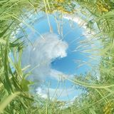 Green summer. Field and sky fisheye lens background Royalty Free Stock Photo