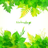 Green summer foliage vector background Royalty Free Stock Images