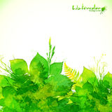 Green summer foliage vector background Stock Images
