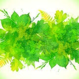 Green summer foliage vector background Stock Photos