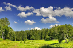 Green summer forest Royalty Free Stock Photos