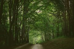Green summer forest grove in the park of Kislovodsk. Green summer forest grove in the park of the city of Kislovodsk royalty free stock images