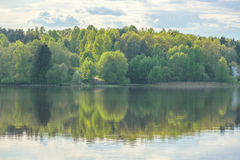 Green summer forest and its reflection in the lake.  Stock Photography