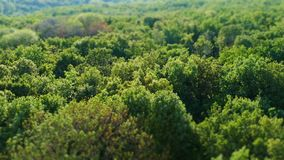 Green summer forest panorama, aerial view with, shift blurred effect. Green summer forest panorama, aerial view with tilt shift blurred effect royalty free stock photos