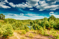 Green Summer Forest, Russian Nature. Green Summer Forest View. Sunny Day, Blue Sky royalty free stock photography