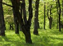 Green summer forest stock photos