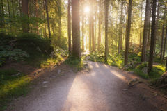 Green summer forest. At sunny morning royalty free stock images