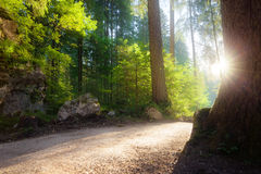 Green summer forest. At sunny morning Stock Photos