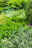Green summer garden Stock Image