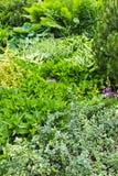 Green summer garden Stock Image