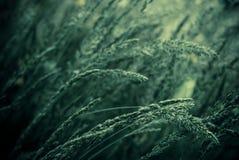 Green summer grass. A background of green summer grass royalty free stock photography